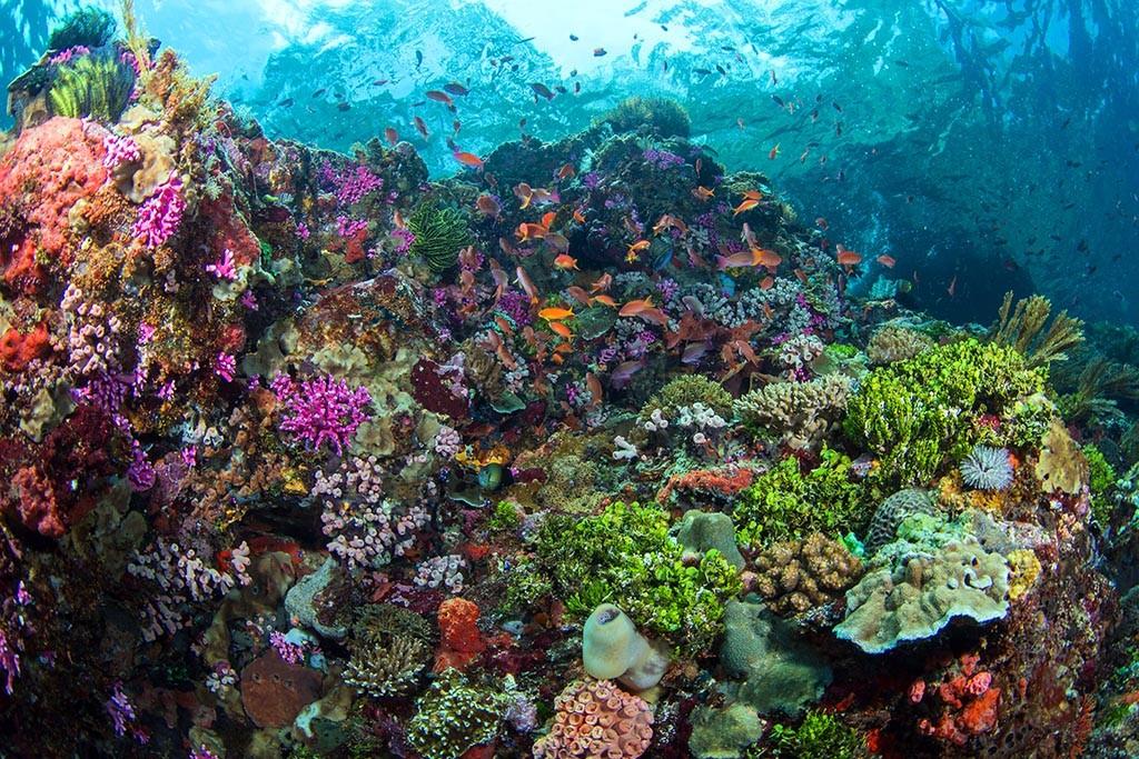 01 alami alor dive center indonesien tauchreisen