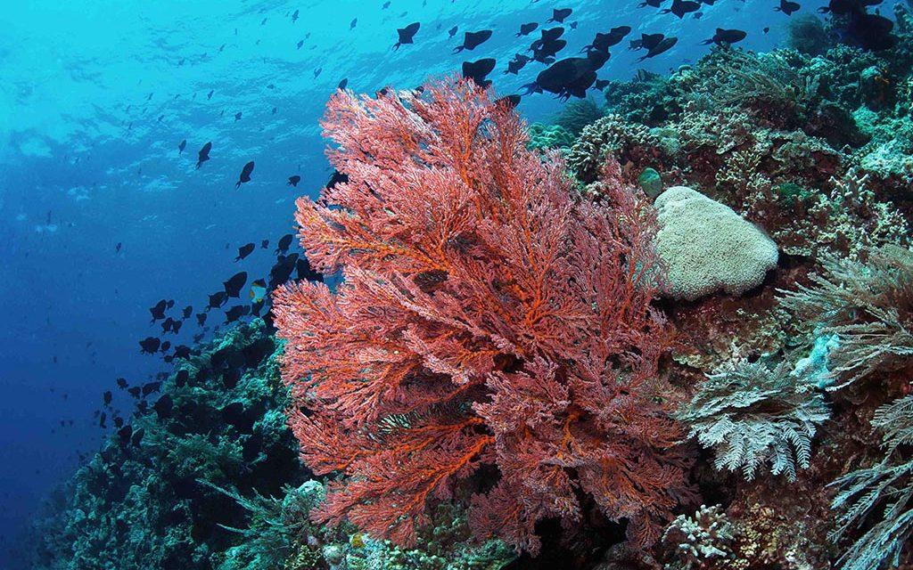 https://as-tauchreisen.de/wp-content/uploads/02-murex-manado-dive-center-sulawesi-tauchbasis-indonesien-1024x640.jpg