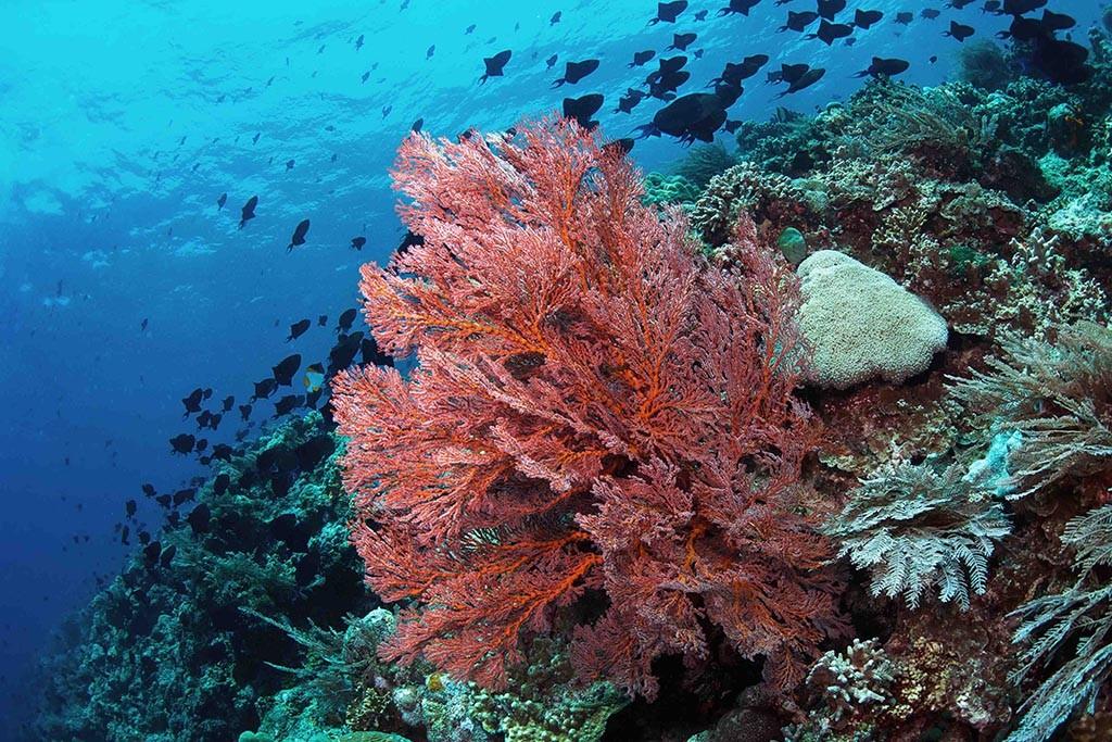 02 murex manado dive center sulawesi tauchbasis indonesien