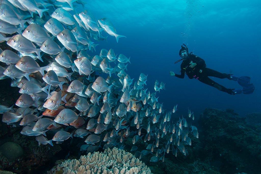 coral divers - sodwana bay suedafrika