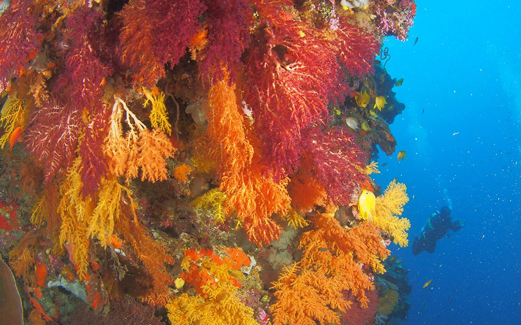 Dive Wananavu Fiji