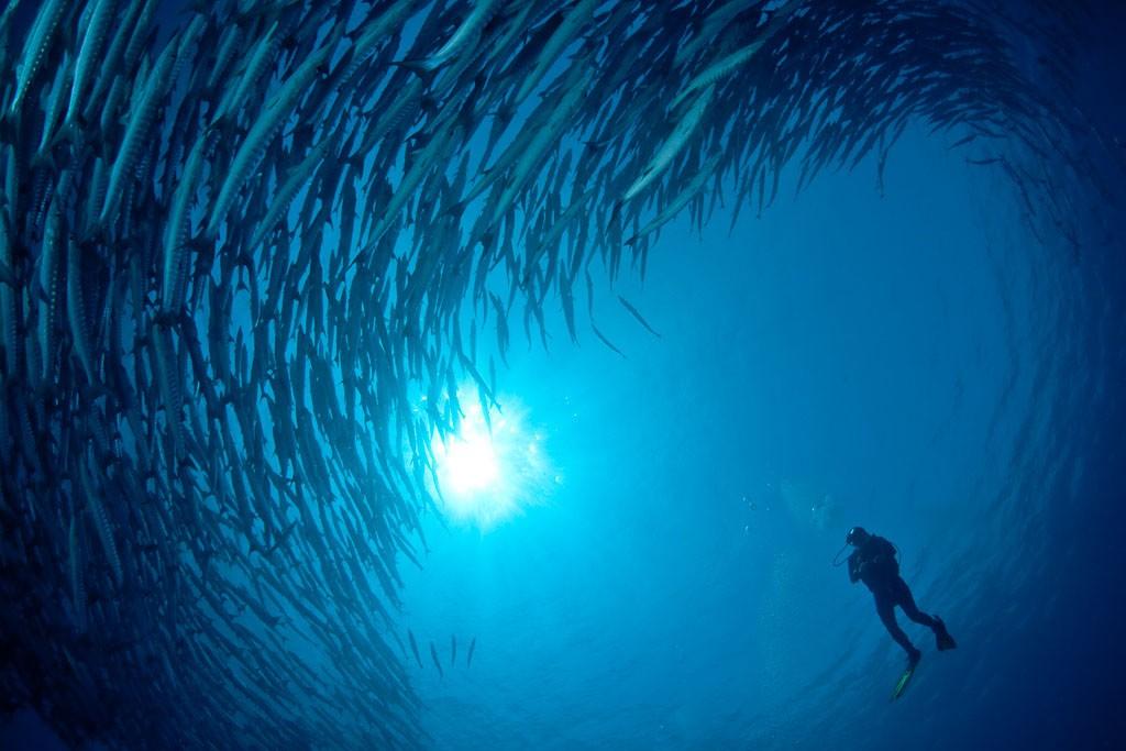 03 tasik divers derawan dive lodge kallimantan indonesien