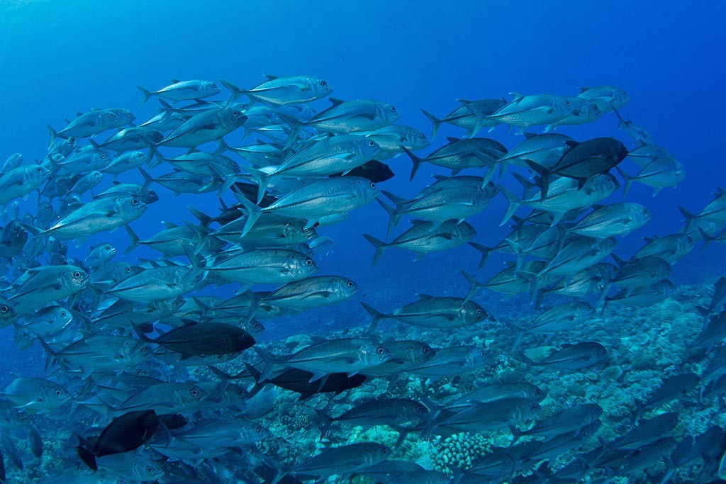04 index salomonen solomons png master liveaboards tauchsafaris papua neuguinea tauchen