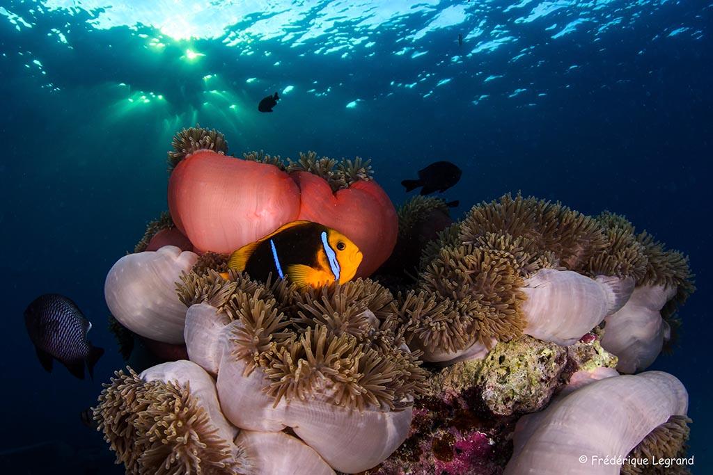 04 index tahiti franzoesisch polynesien suedsee copyright frederique legrand tropdive
