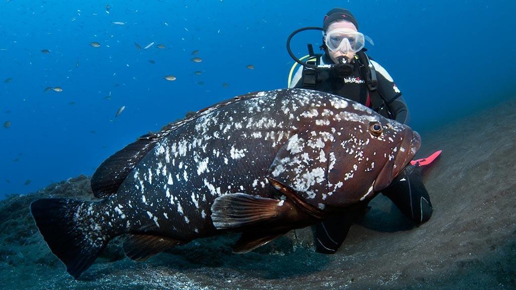 https://as-tauchreisen.de/wp-content/uploads/04-manta-diving-madeira-tauchreisen-mittelmeer.jpg