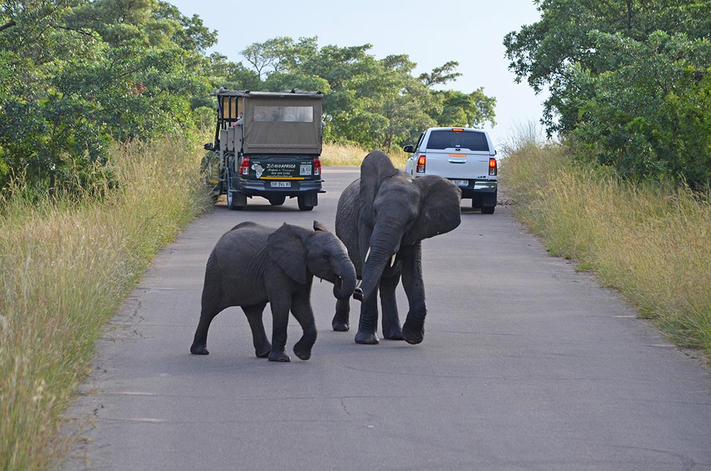 04 tauchreisen suedafrika km