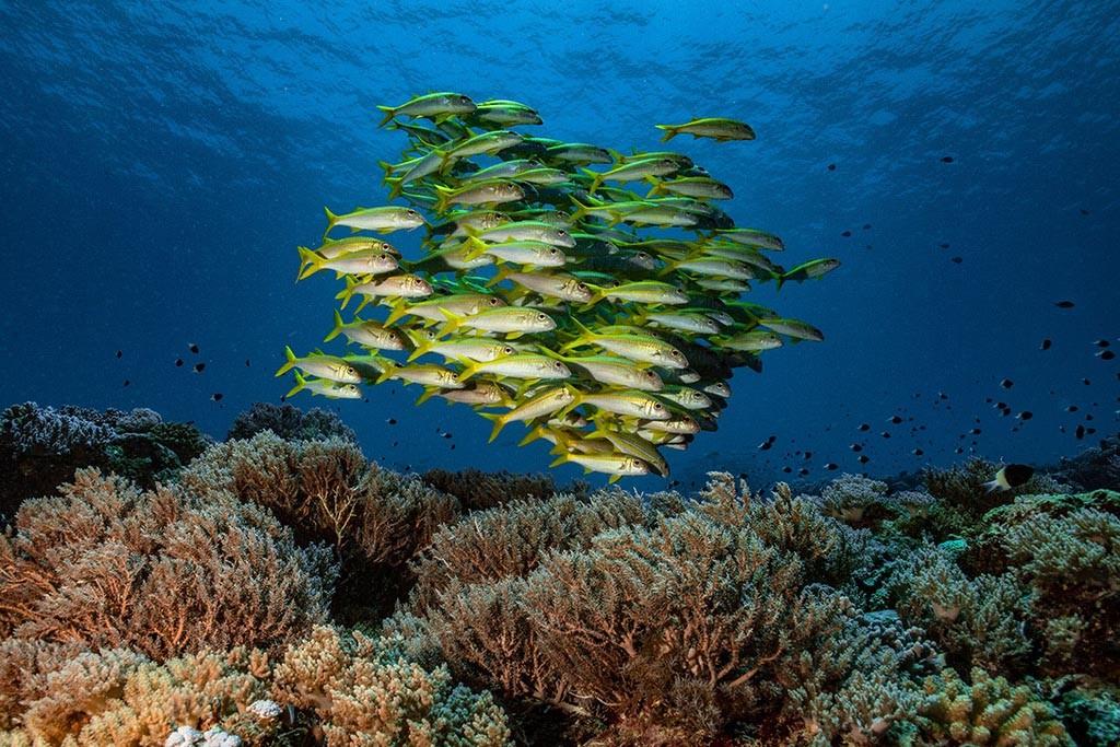 04 tgi diving zanzibar tansania