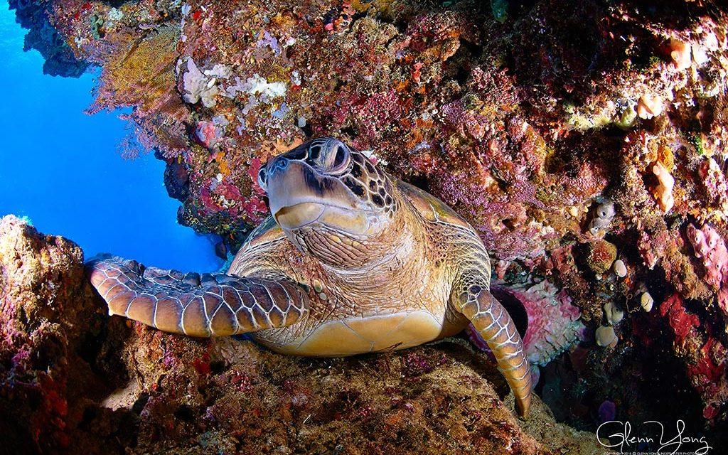 https://as-tauchreisen.de/wp-content/uploads/05-odyssea-divers-cocotinos-sekotong-lombok-tauchbasis-1024x640.jpg