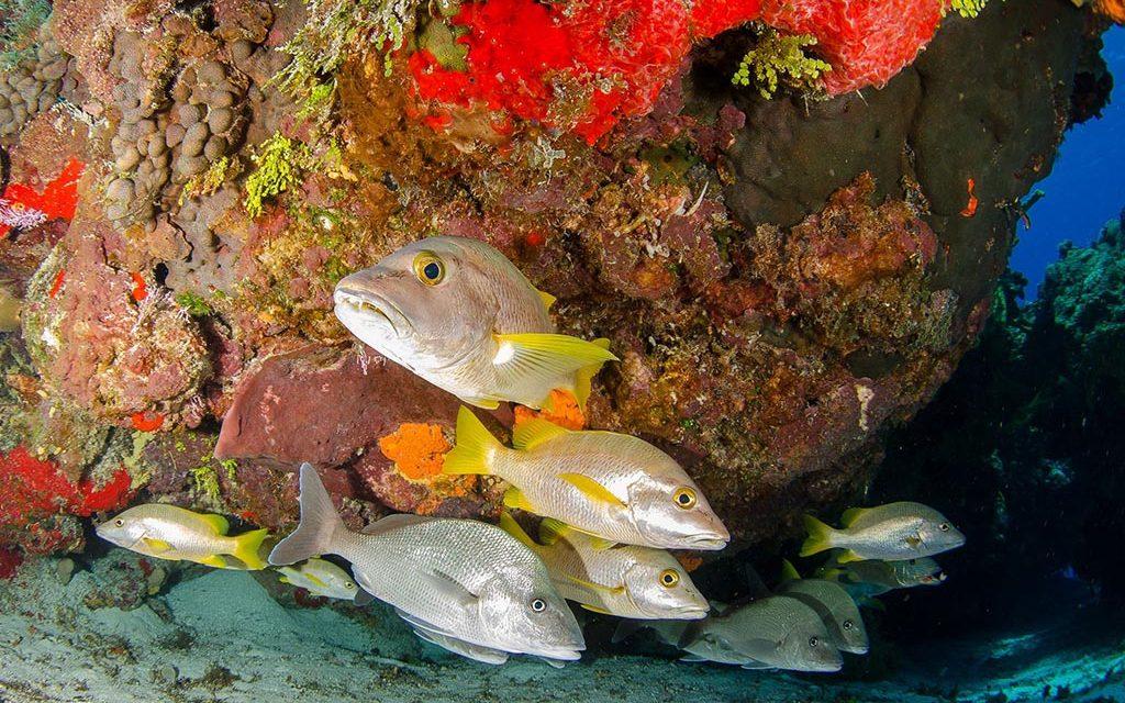 Pro Dive Mexico – Cozumel