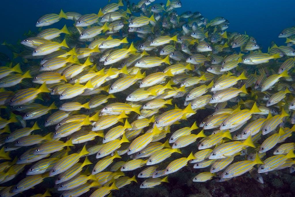 06 gangga divers tauchbasis nordsulawesi indonesien