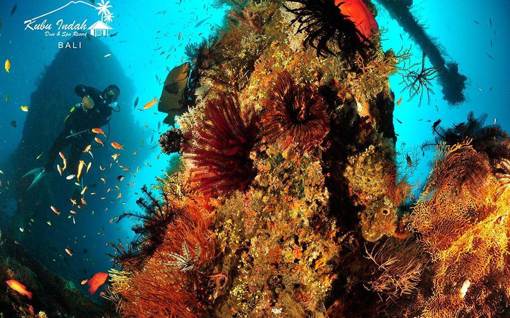 Kubu Indah Dive Resort: 40% Rabatt bis Ende Juni 2022