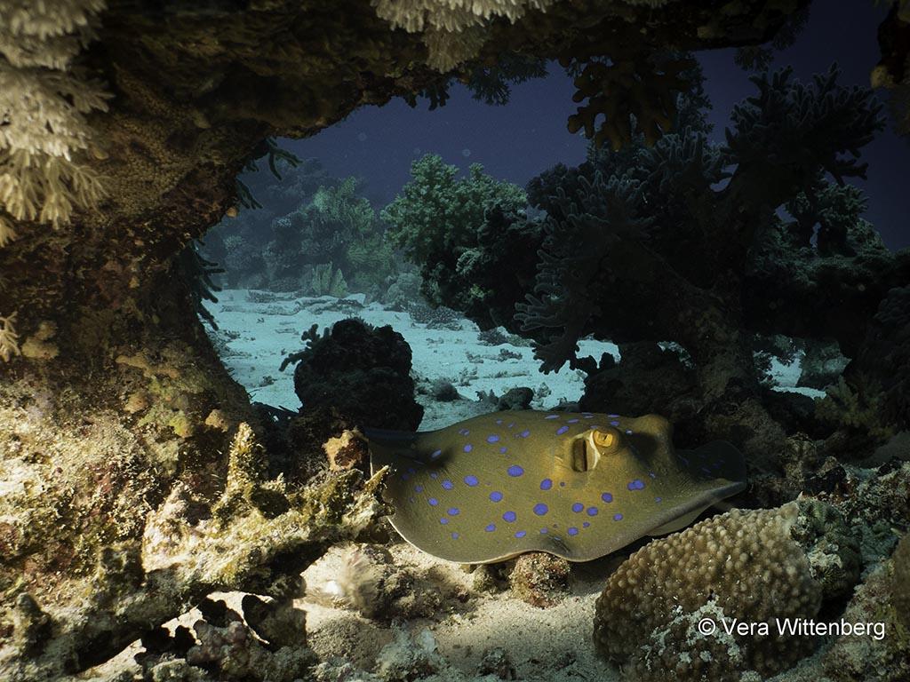 07 blue ocean dive dahab tauchbasis sinai aegypten 1