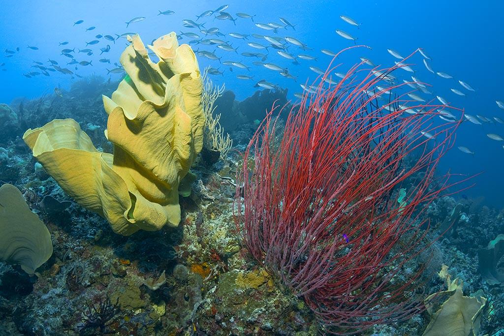 07 misool dive centre raja ampat credit Jones Shimlock