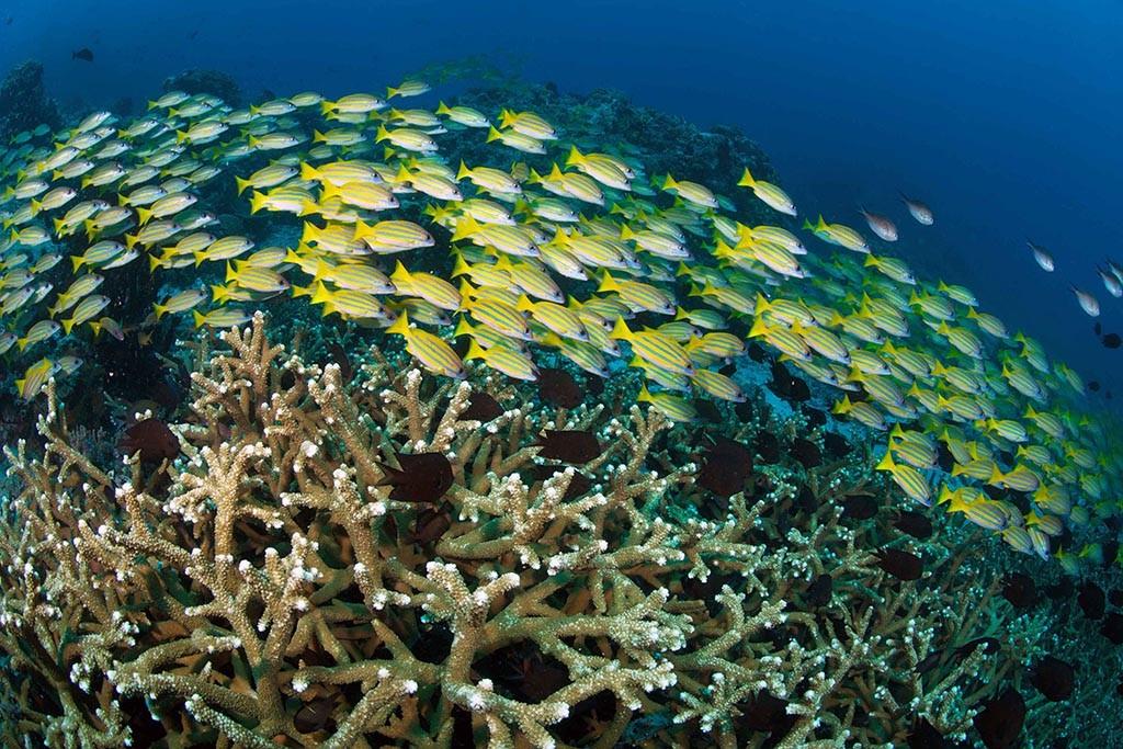07 murex bangka dive center sulawesi indoneisen tauchen