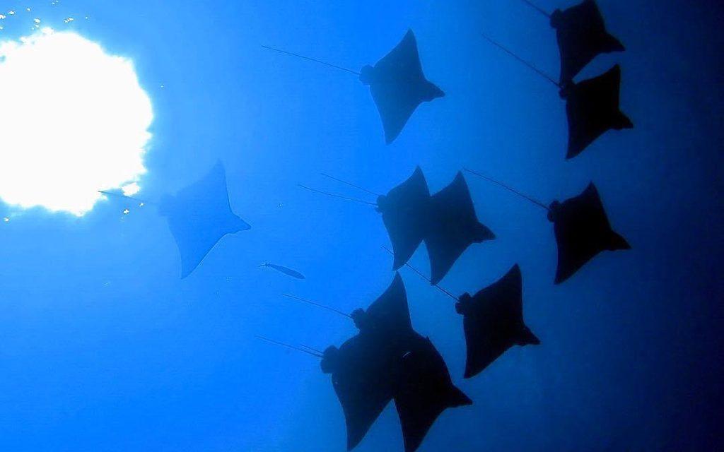 Southern Maldives Divers