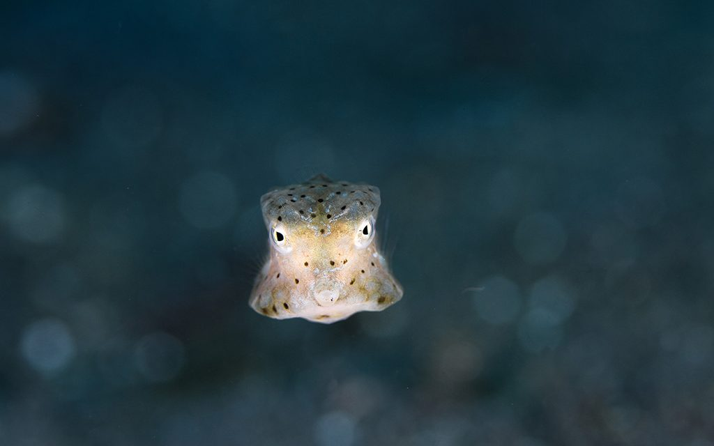 Eco Divers Lembeh