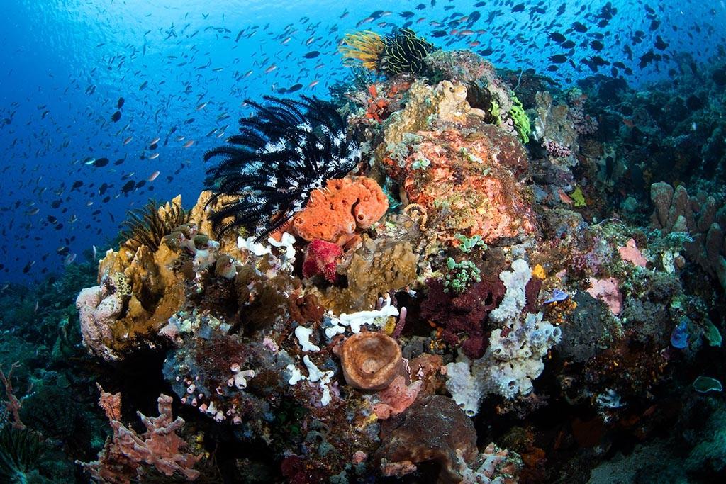 08 alami alor dive center indonesien tauchreisen