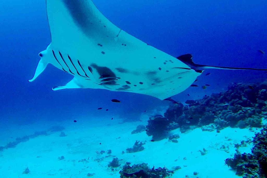 08 cove eco resort tauchbasis raja ampat indonesien