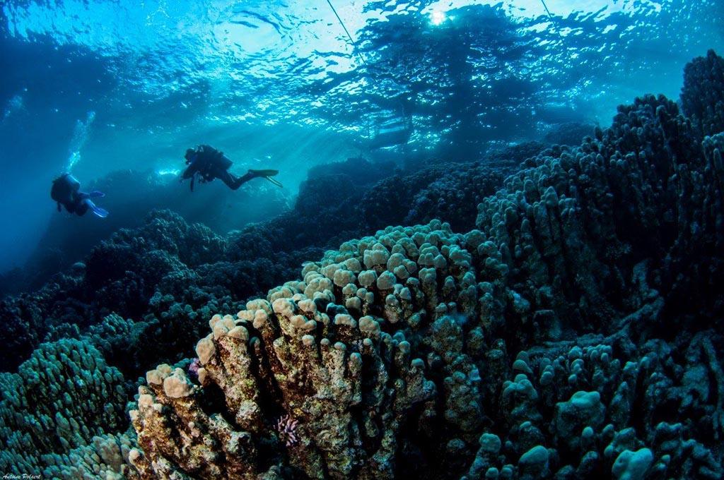 08 wonderful dive el quseir rotes meer 1