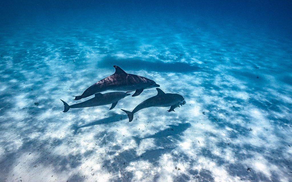 TGI Diving Zanzibar