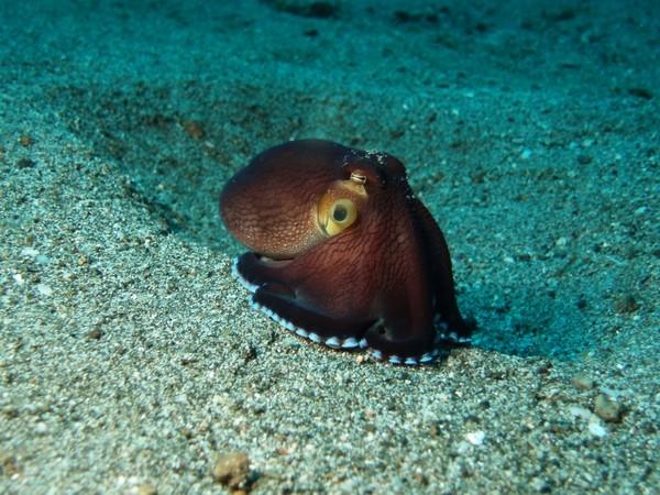 https://as-tauchreisen.de/wp-content/uploads/09-two-fish-divers-lembeh-tauchbasis-indonesien.jpg