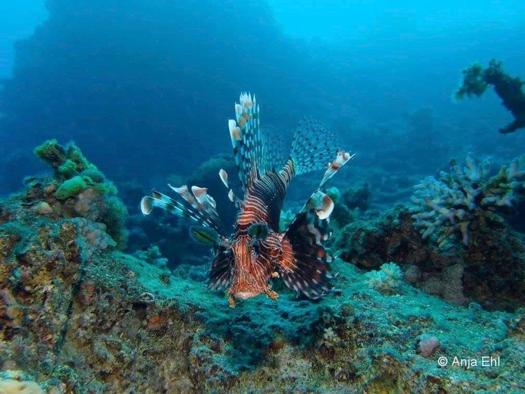 10 blue ocean dive dahab tauchbasis sinai aegypten 1