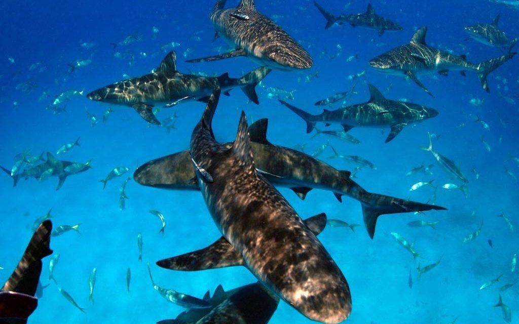 https://as-tauchreisen.de/wp-content/uploads/11-stuart-coves-dive-bahamas-nassau-1024x640.jpg