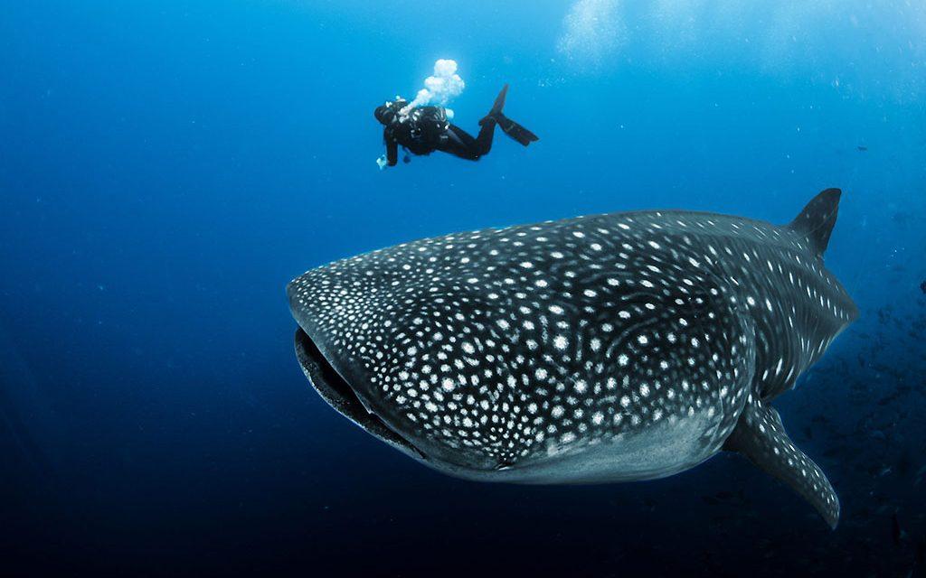 Galapagos Aqua: Frühbucher Angebot November / Dezember 2021