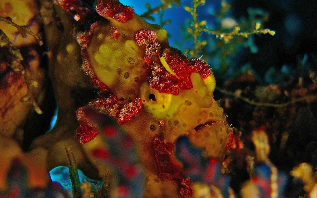 https://as-tauchreisen.de/wp-content/uploads/12-two-fish-divers-bunaken-tauchbasis-nordsulawesi-1024x640.jpg