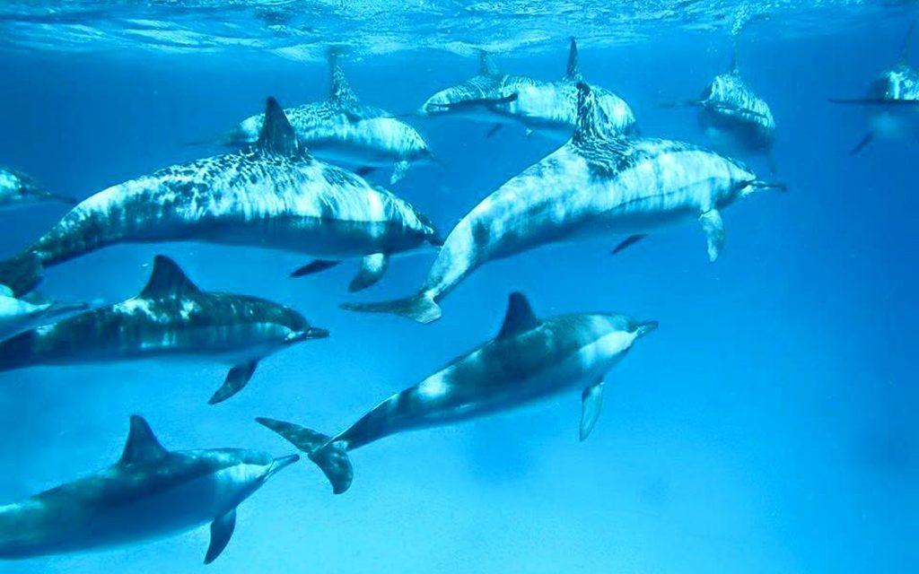 Wonderful Dive