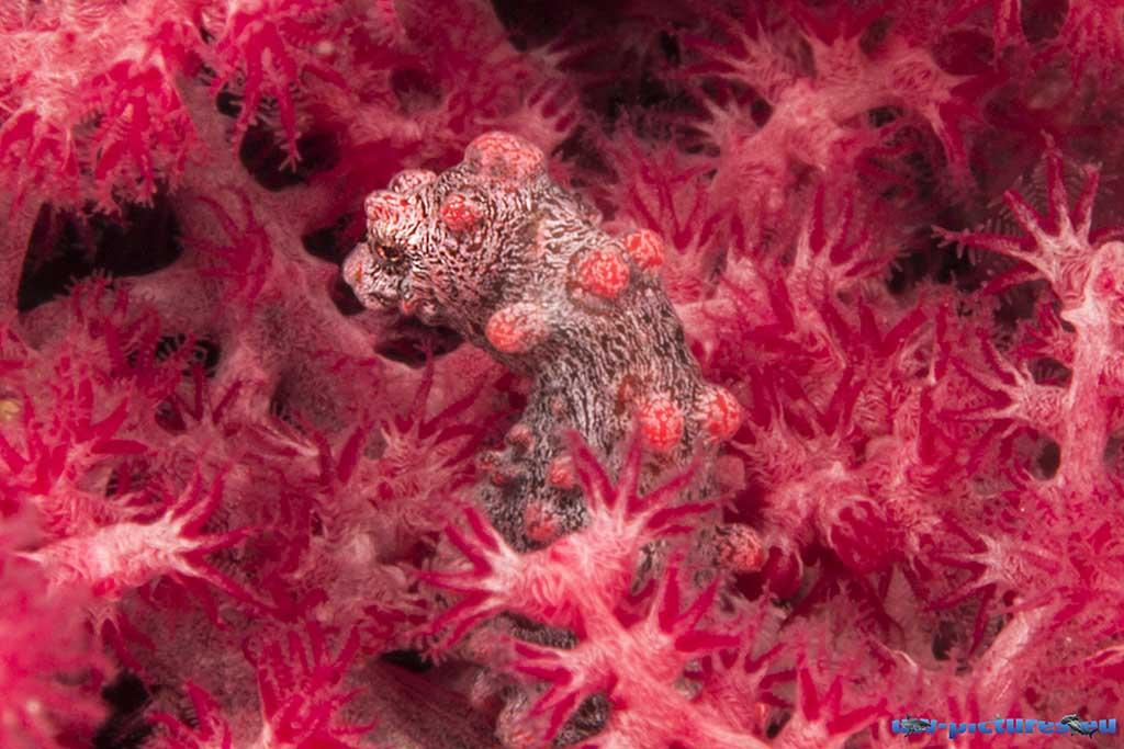 Cabilao Underwater World 15
