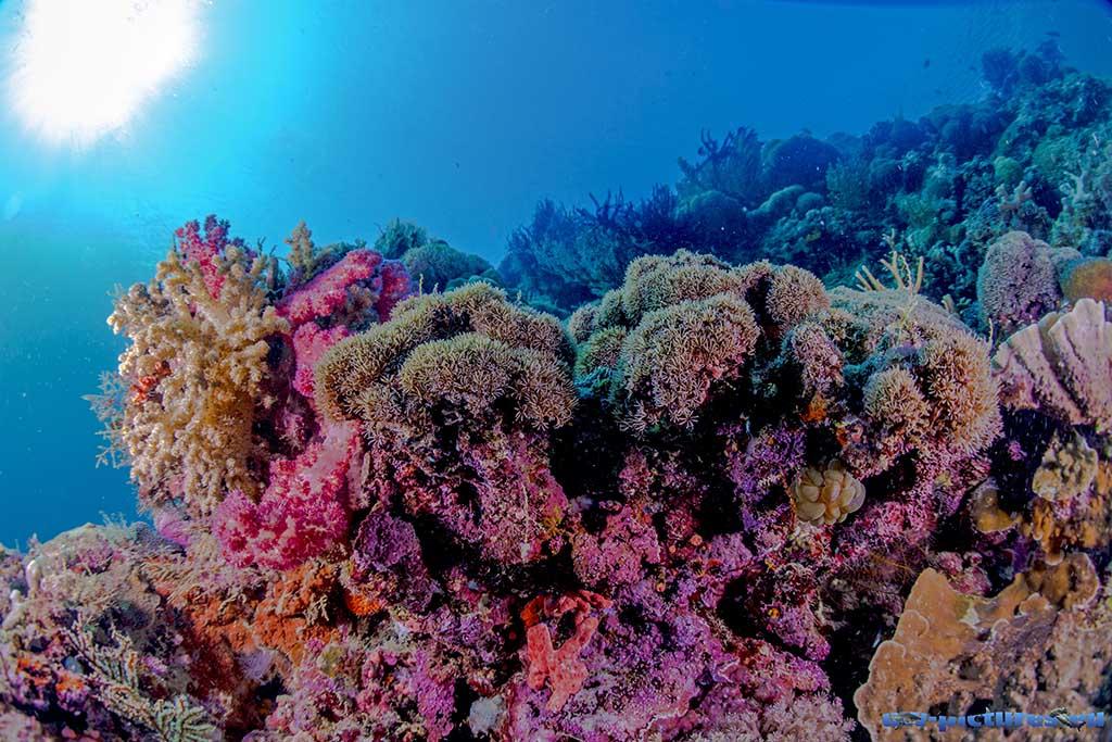 Cabilao Underwater World 42