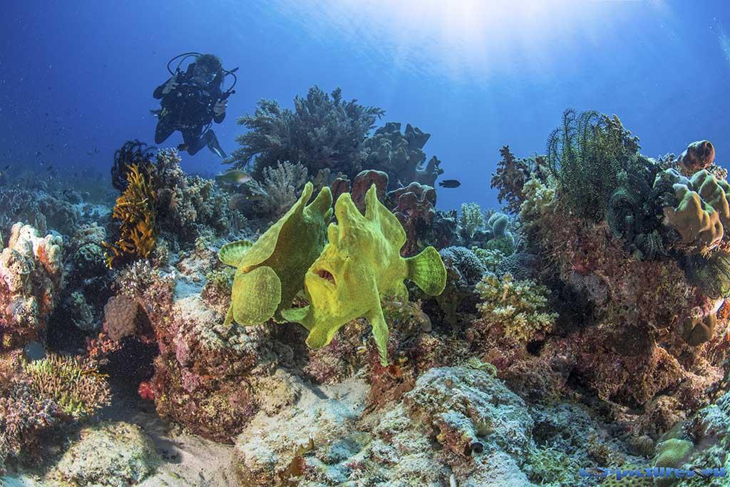 Cabilao Underwater World 58