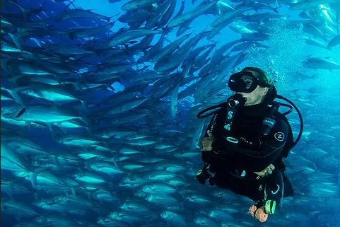 https://as-tauchreisen.de/wp-content/uploads/Cabo-Pulmo-Dive-Shop-Tauchbasis-Baja-California-Mexiko-3.jpg
