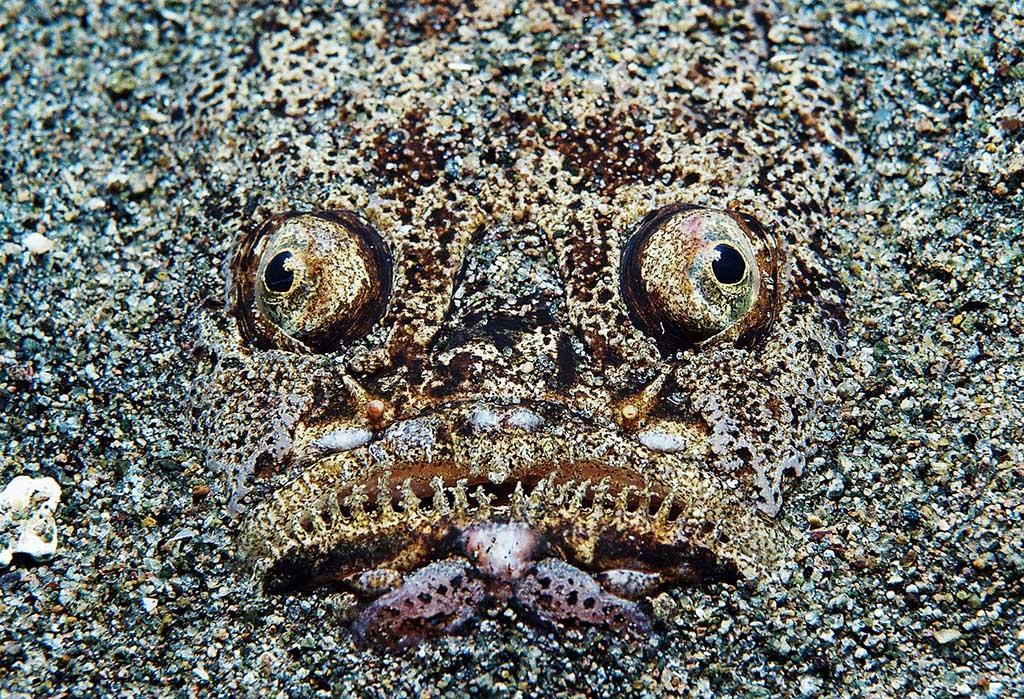 Dauin unterwater photos 71