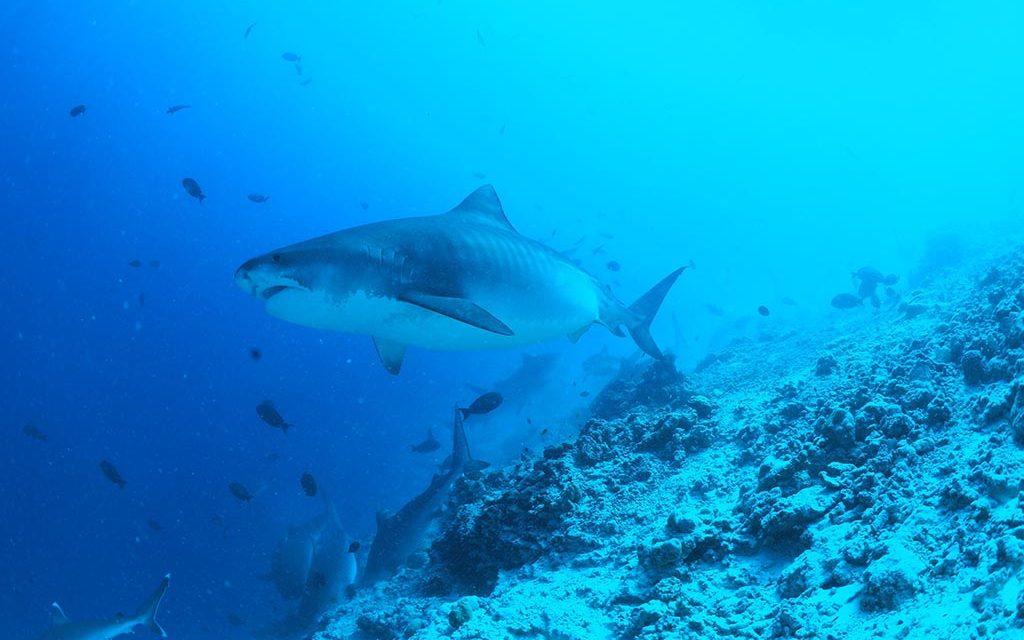 Dive Point Fuvahmulah : Eröffungsangebot 2021 / 2022