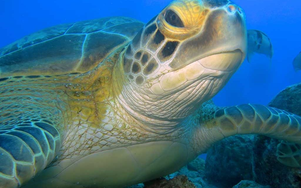 Diving World Mauritius