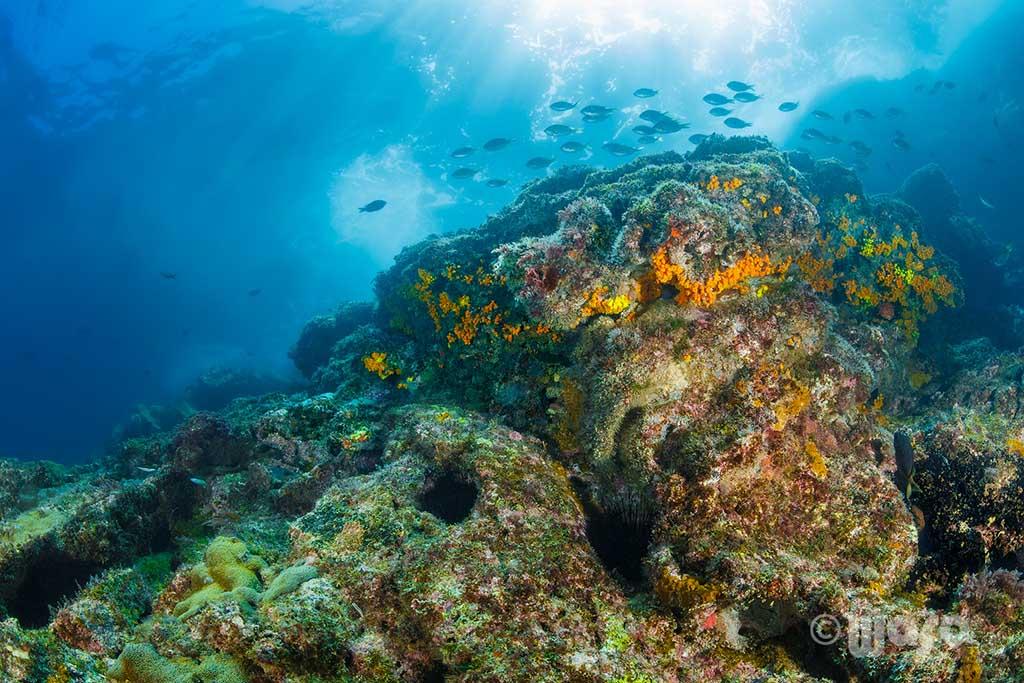 Haliotis Dive Center08