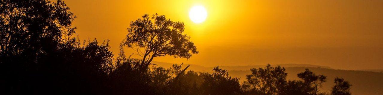 https://as-tauchreisen.de/wp-content/uploads/Header-Suedafrika-Reisebericht-Jolyon-Graham-1280x320.jpg