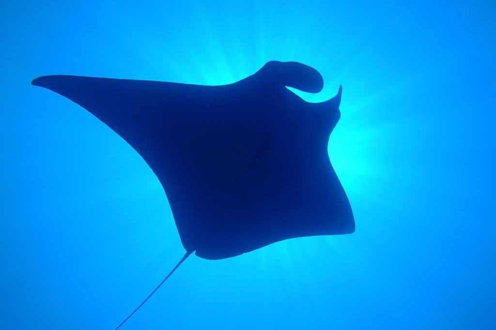 Index Palawan Dugong Dive Center