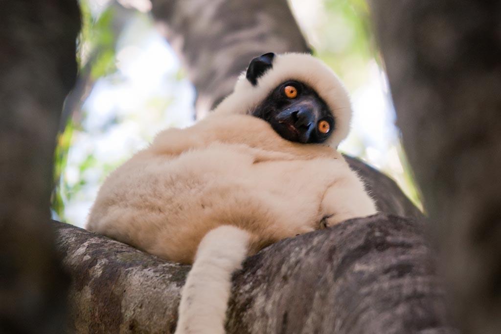 Index1 Nosy Sakatia Tauchreisen Madagaskar