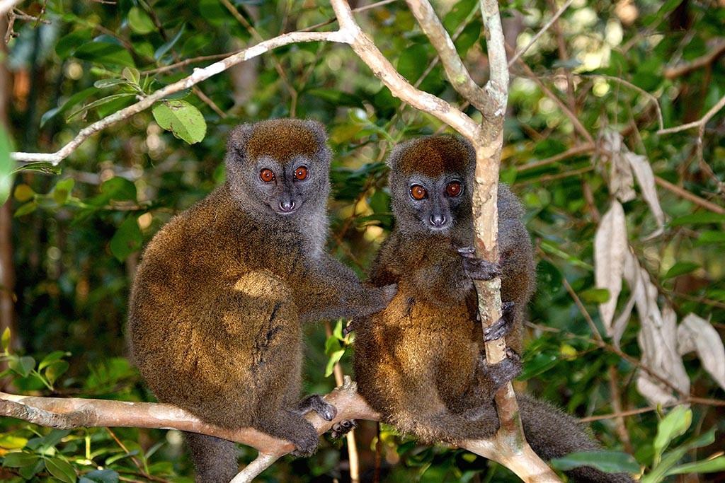 Index2 Nosy Be Tauchreisen Madagaskar