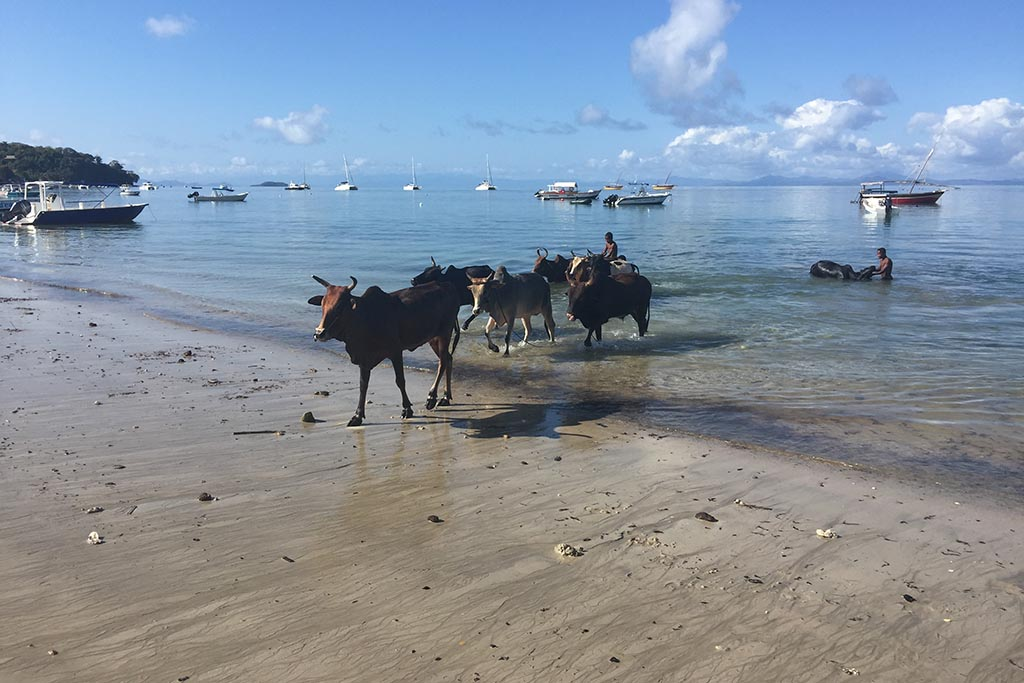 Index2 Nosy Sakatia Tauchreisen Madagaskar