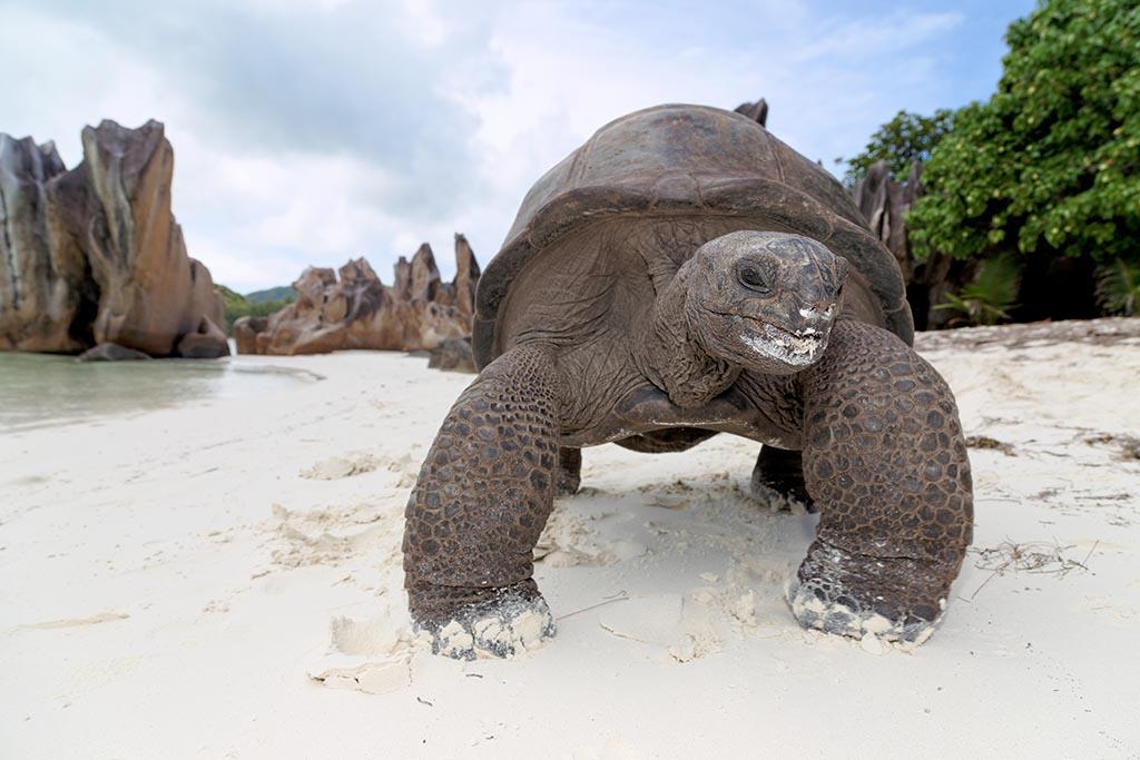 Index2 Seychellen Tortoise Curieuse Island