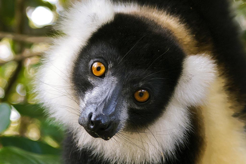 Index4 Sainte Marie Tauchreisen Madagaskar