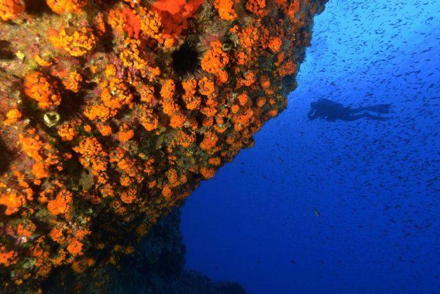 Lampedusa Gruppenreise 2021 Absolut Scuba