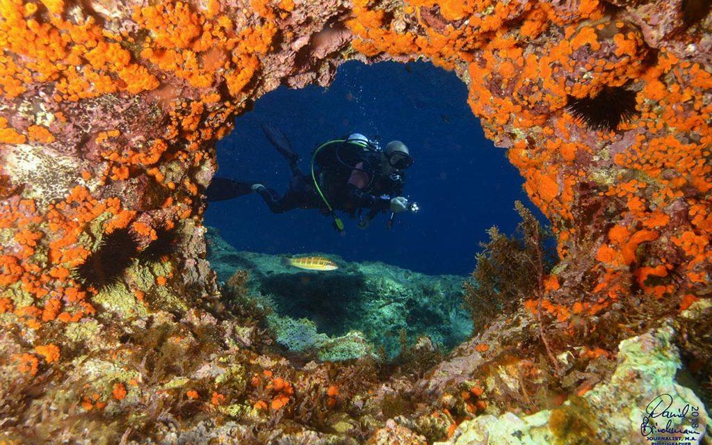 https://as-tauchreisen.de/wp-content/uploads/Lampedusa-Gruppenreise-Beitragsbild-1024x640.jpg