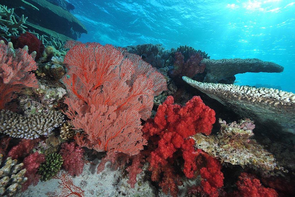 Neukaledonien Tauchreisen c P.Laboute NCTPS
