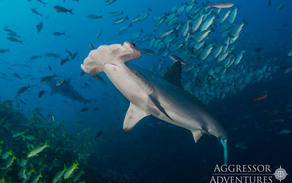 https://as-tauchreisen.de/wp-content/uploads/Okeanos-212-1024x640.jpg