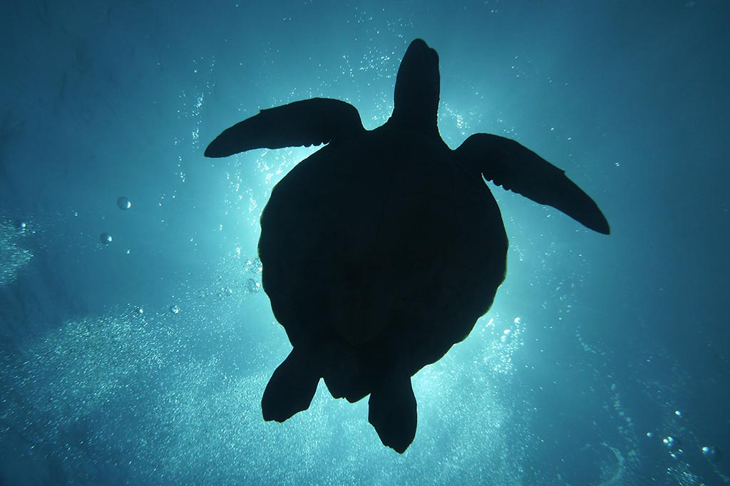 Pacific Divers Rarotonga 1